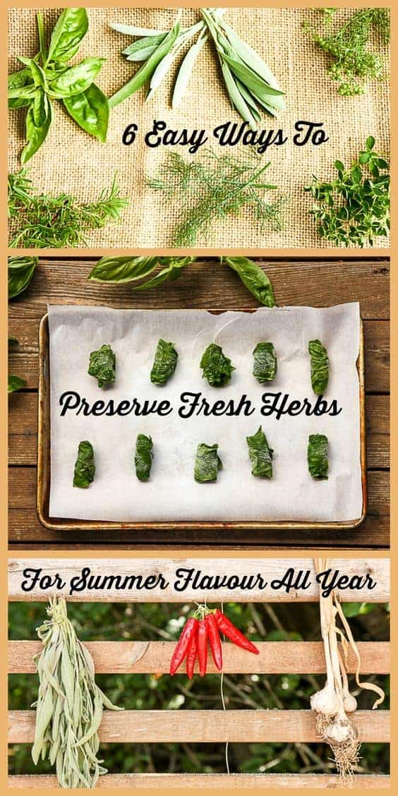 Preserving Fresh Herbs - 6 Ways For Summer Flavour All Year Long