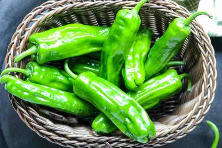 Just picked green peppers in a basket