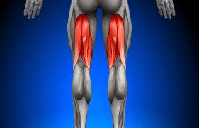 hamstring3 - Shockwave Therapy for Hamstring Tendinopathy