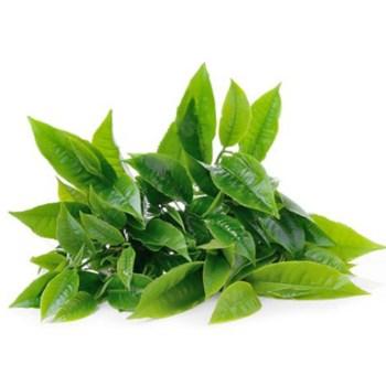 Botanical Extracts
