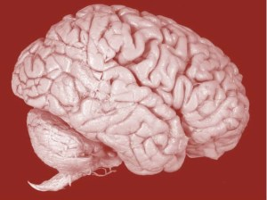 cropped brain