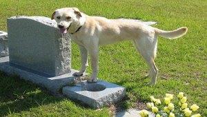 True dog story