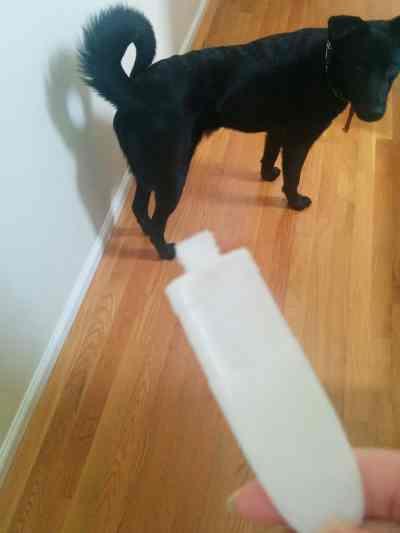 dog-ate-glue-funny