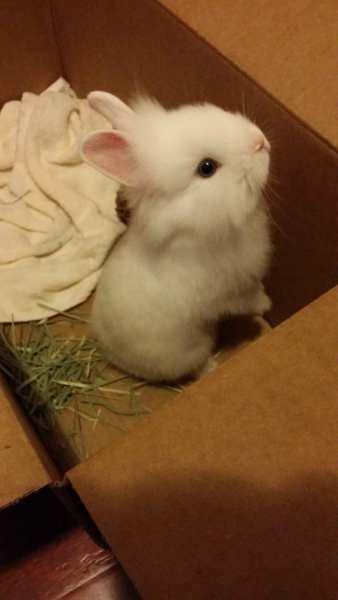 blue-eye-white-bunny