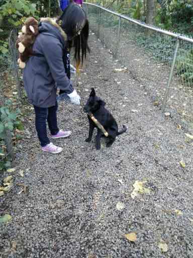 puppy black with stick