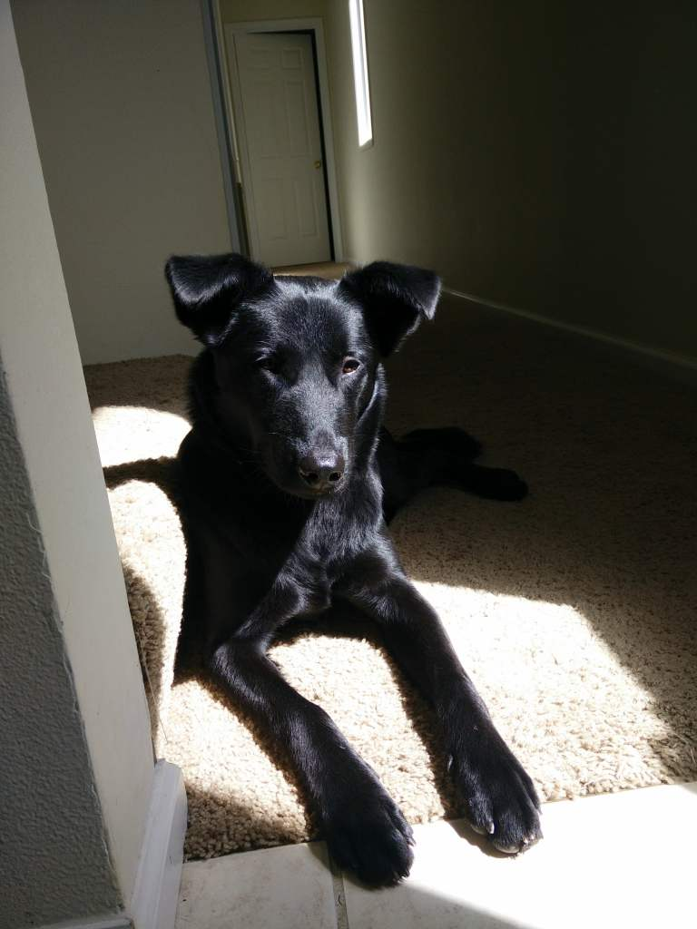 black dog in sunlight