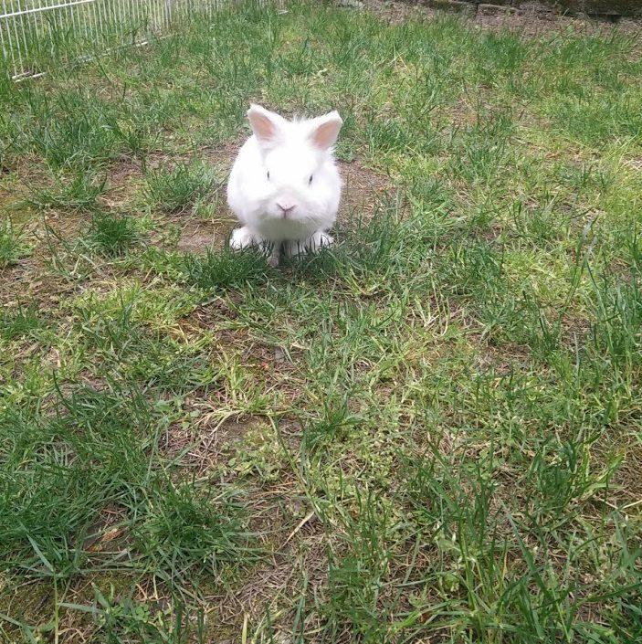 cute bunny in yard