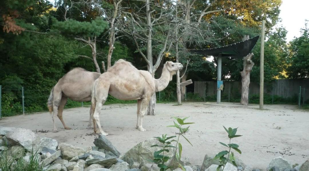 Providence Zoo