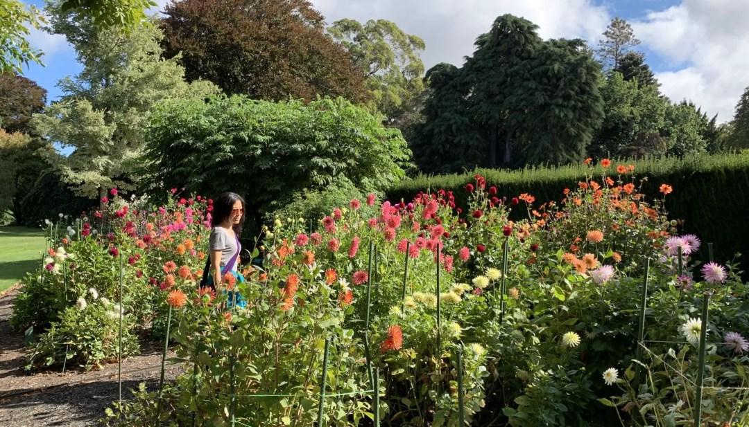 Dahlia Garden at the Christchurch Botanical Gardens