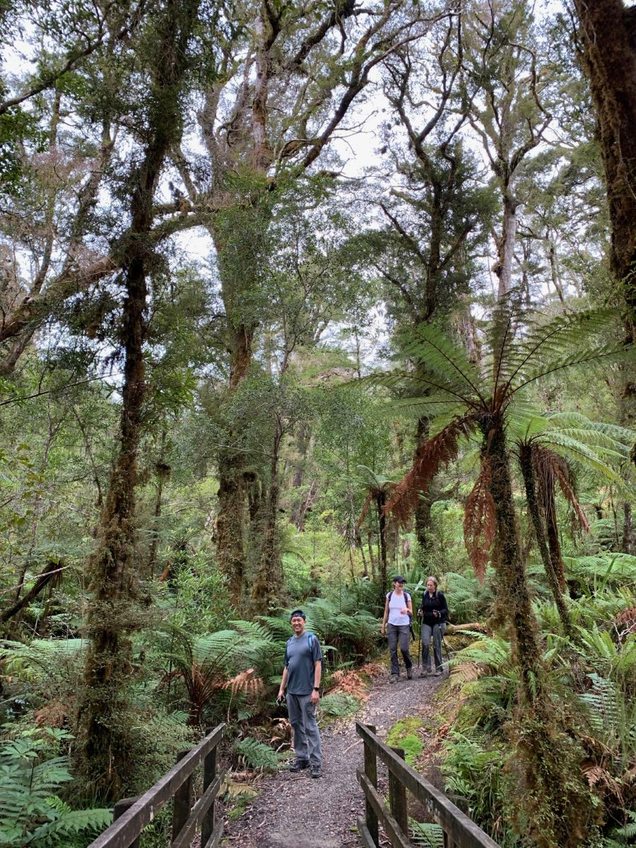 Lush forest in the Paparoa National Park