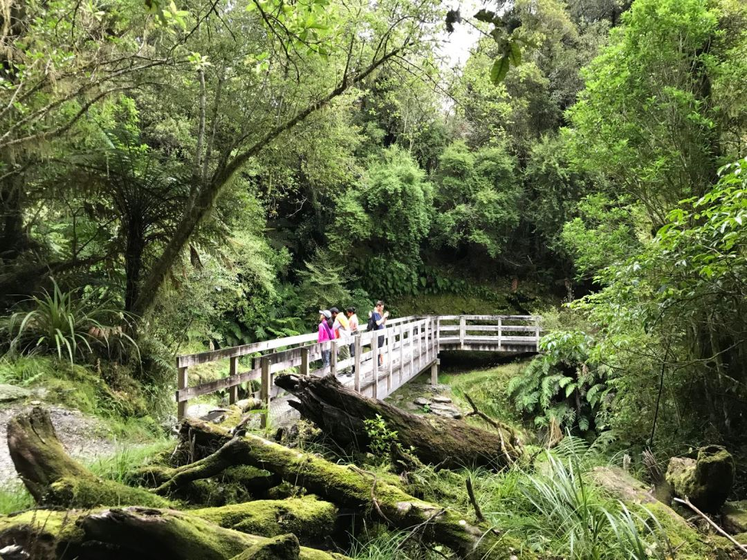 Hike in the town of Franz Joseph Glacier