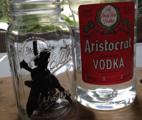 vanilla beans in jar with vodka bottle next to it