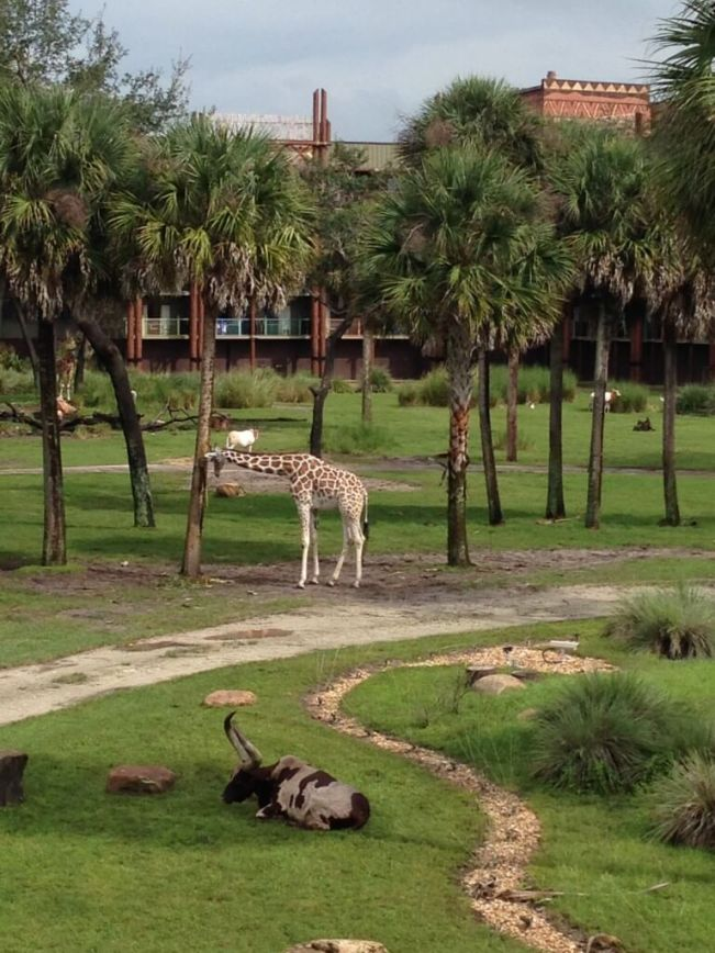animals at animal kingdom lodge