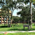 Disney's Animal Kingdom Lodge Resort Review
