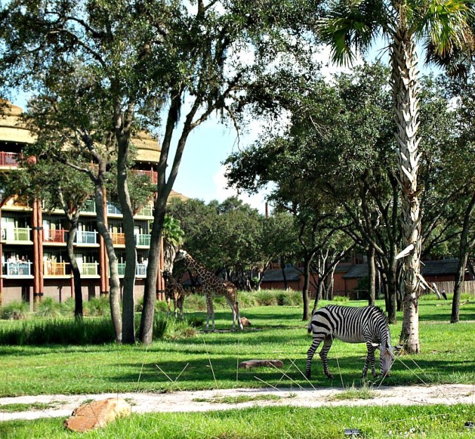 Giraffe and zebra at Disney's Animal Kingdom Lodge