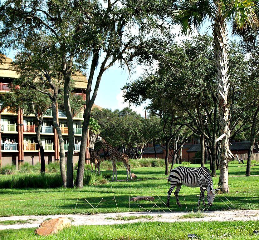 Giraffe and zebra at Disney's Animal Kingdom Lodge
