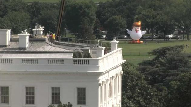 Giant inflatable chicken appears behind White House | abc7.com