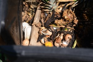 composting, how to start a compost pile, indoor composting, outdoor composting, compost