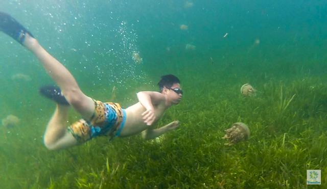 Stingless Jellyfish in Siargao