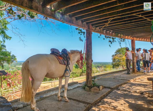 A resting horse at Mitra's Ranch.