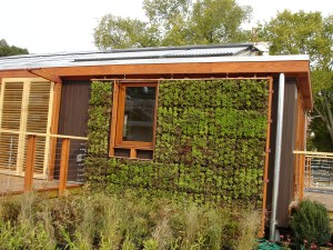 vegetative wall