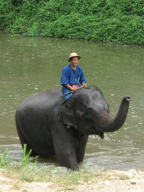 plan my gap year experiences: elephant in Thailand