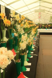 2016 Yorkshire events - Harrogate Flower Show