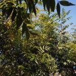 tree varieties