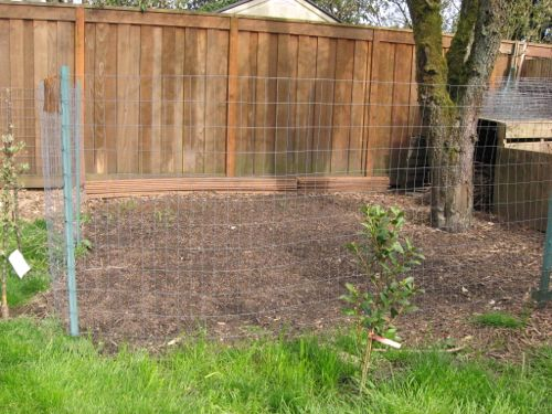 First step is to plant grass or grain seeds in an enclosed patch in your backyard.
