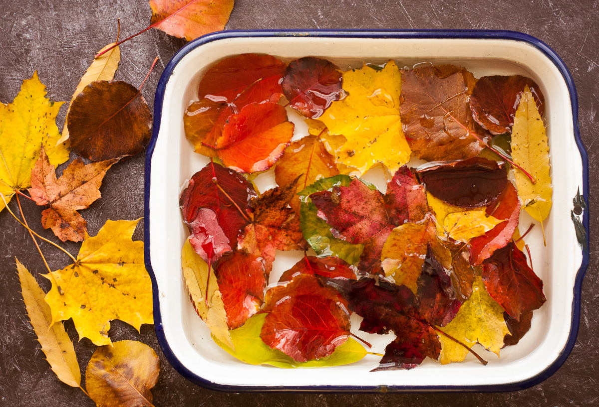 Preserved Autumn Leaves