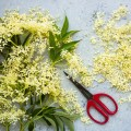 Elderflower Blossoms