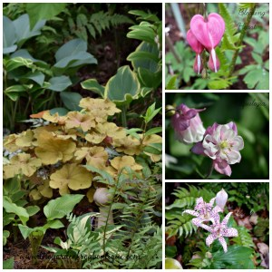 3 Perennials to add to the Shade Garden