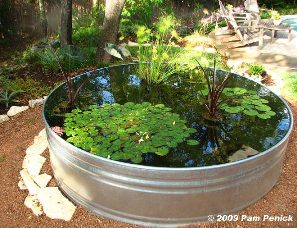 Small Container Water Garden Ideas