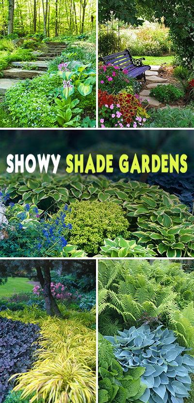 Showy Shade Garden Ideas • The Garden Glove on Shady Yard Ideas  id=27130