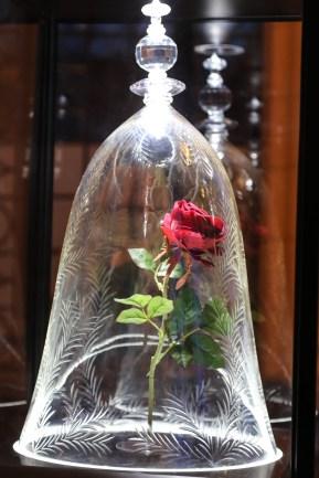 Beast's rose