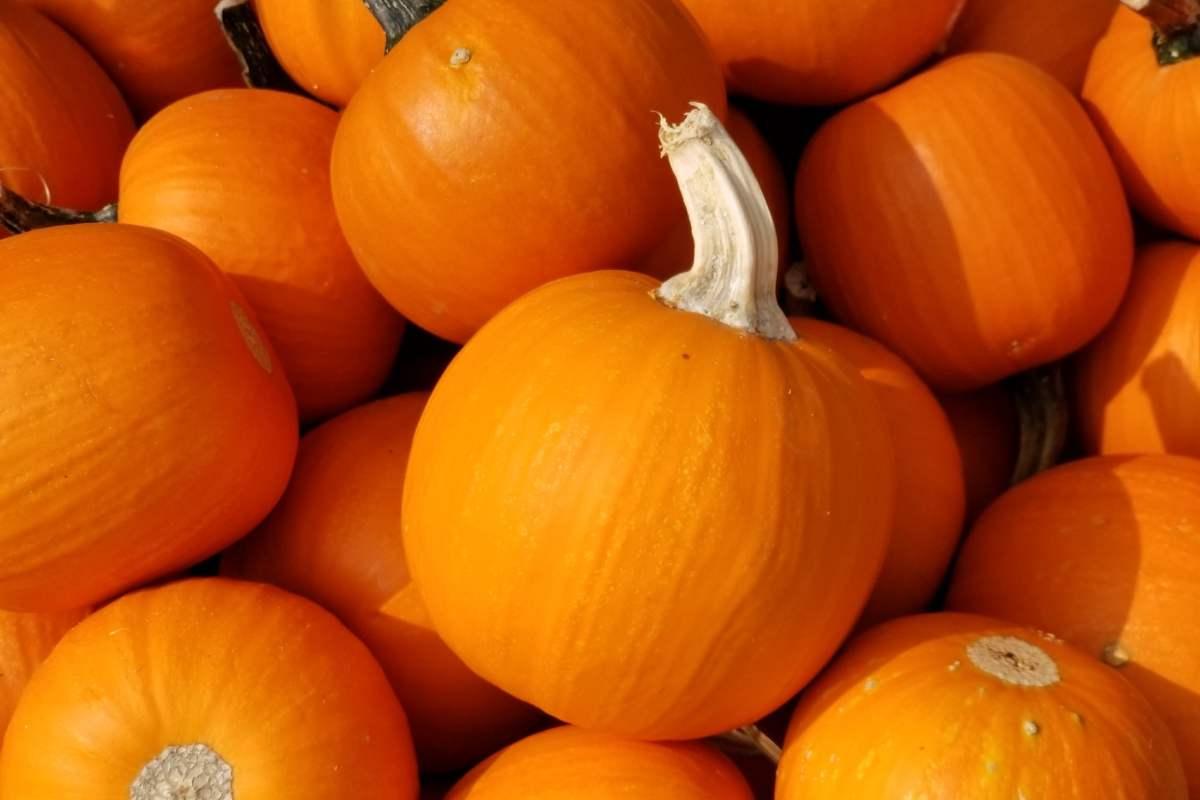 Mini pumpkins | September highlights