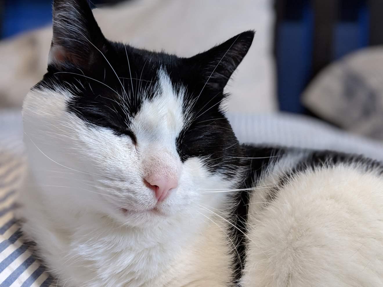 Byron, napping