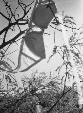 rape tree