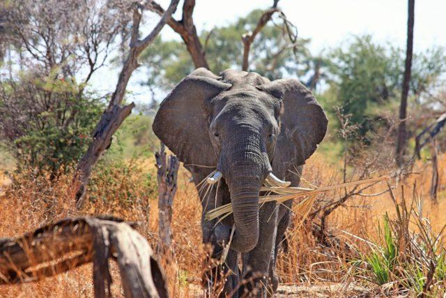 elephant-designerpoint