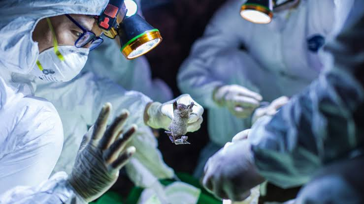 Exclusive: How Nigerians Are Making Money Through Coronavirus + Senate's Intervention