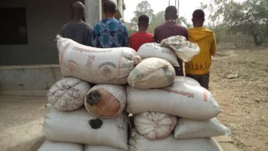Photo of NDLEA Seizes 1,292kg Of Illicit Drug In Ondo Forest, Arrests 9 Suspects + Video, Photos