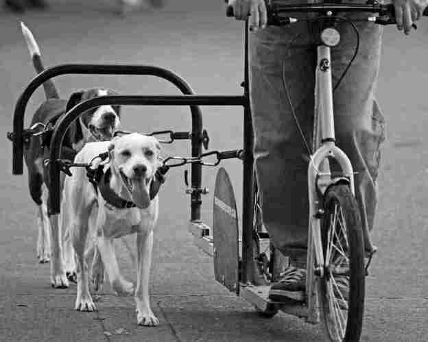 DogPoweredScooter