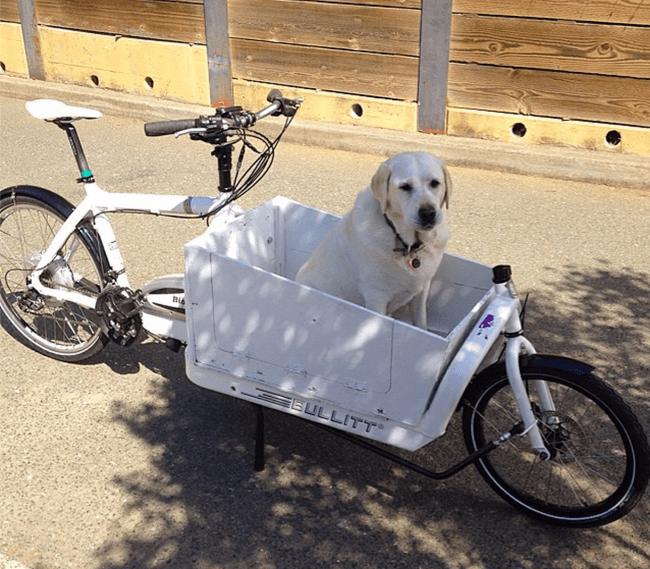 Bullitt Cargo Bike
