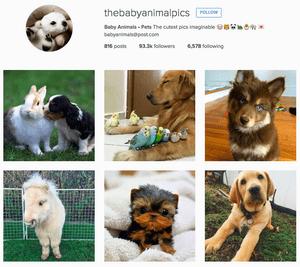 baby-animal-pics instagram
