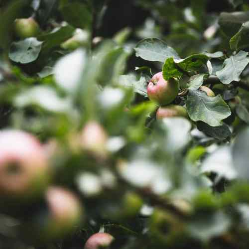 Hidden Treasures: Mercier Orchards should be your pick for a day on the farm