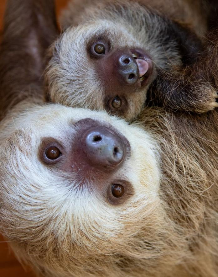Did you know moms can go to Zoo Atlanta for free on Mother's Day?