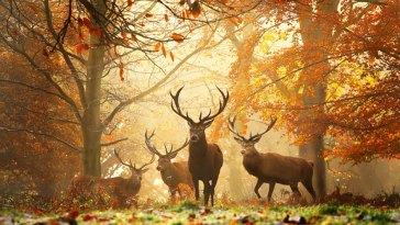 autumn-photography