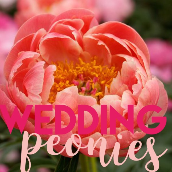 582e3722d8 The perfect flowers for your wedding  Pretty Peonies