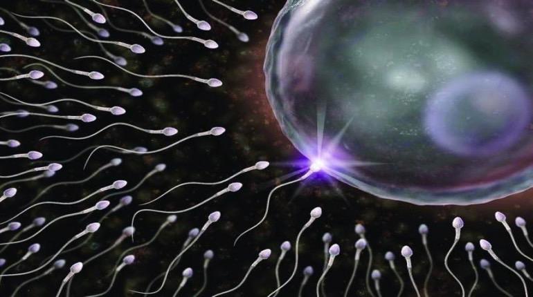 Vasalgel blocca gli spermatozoi