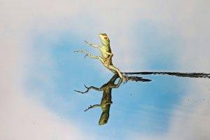 animali che fanno cose incredibili - lucertola gesù cristo